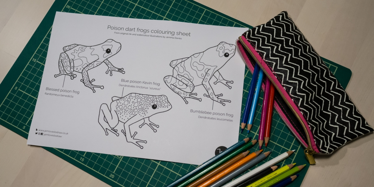 Poison dart frogs colouring sheet