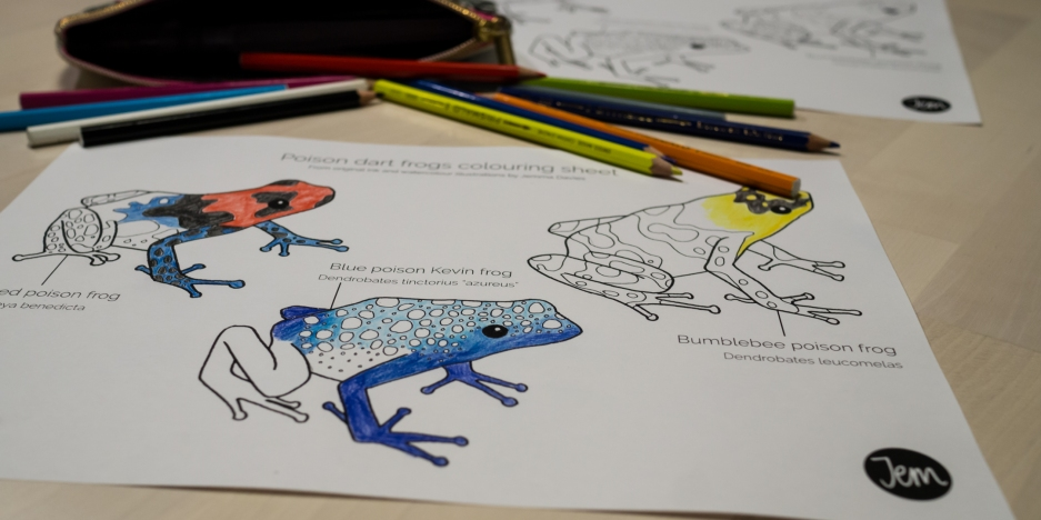 Poison dart frogs colouring sheet, coloured in