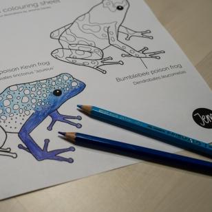 Blue poison Kevin frog