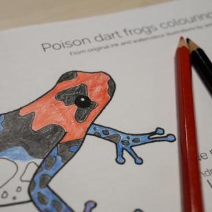 Blessed poison frog
